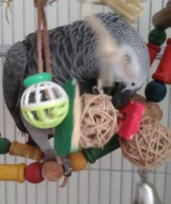 Rico-African Grey Parrot For Sale