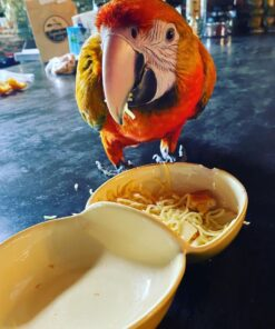 Camelot Macaw For Sale